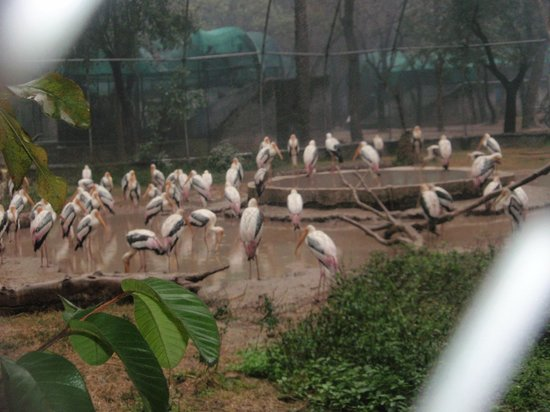Zirakpur, India: Birds