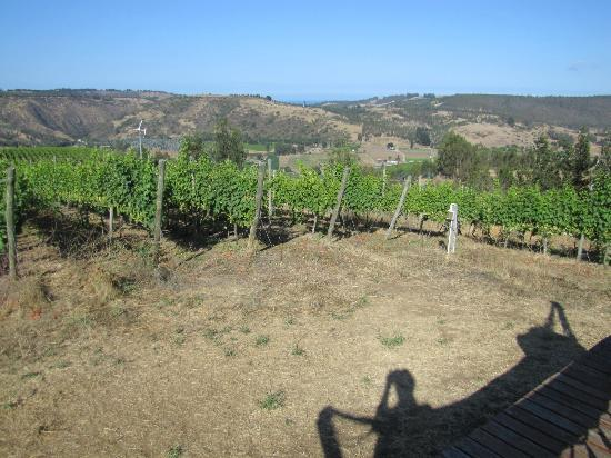 Viña Casa Marín: The view from the guest house over the vineyards to the ocean