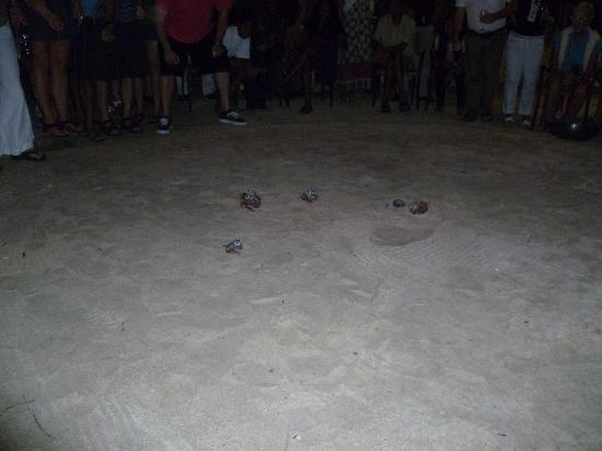 The Owl @ Flamboyant Hotel: crab racing