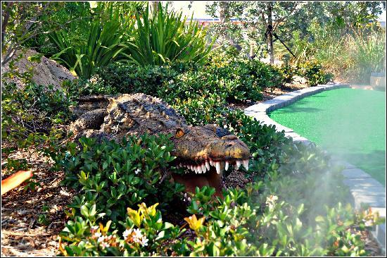 Putt'n Around : Watch for croc's on the Everglades Course