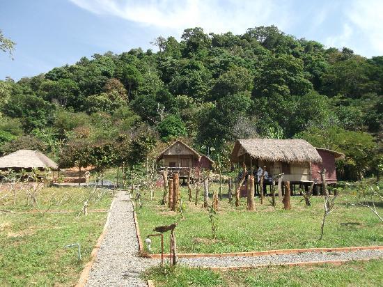 Tree Top Bungalows : bamboo huts