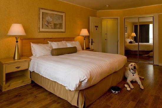 Flamingo Conference Resort & Spa: Pet Friendly