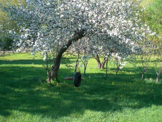 Olde Orchard Farm: in the heart of an apple lies an orchard invisible....