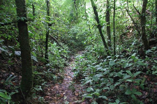 El Cope National Park: An easy trail in the park