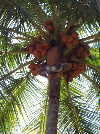 Samara Beach: Human Monkey...
