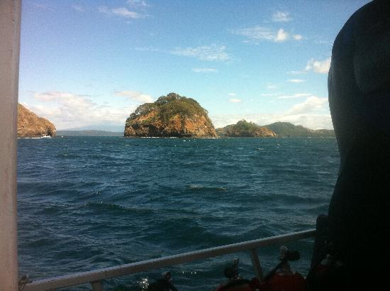 Rich Coast Diving: Its beautiful out there!