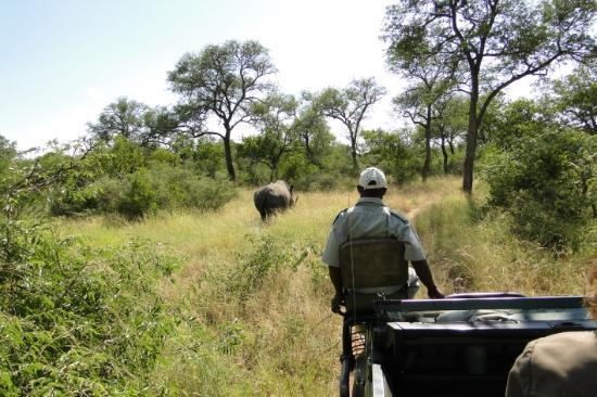 Gomo Gomo Game Lodge: Rinoceronte a la vista