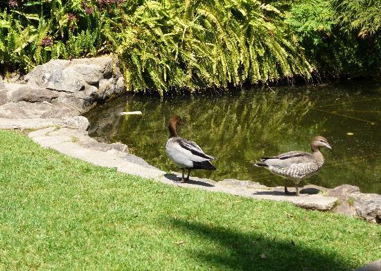 Albury Botanic Garden: Albury Bot. Gdns 3