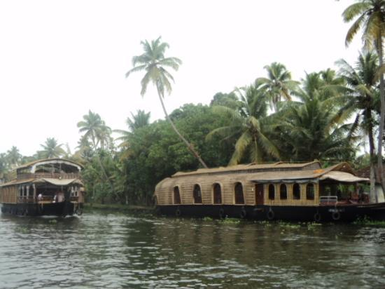 Ashtamudi Homestay: Our family enjoyed caroming while it rained