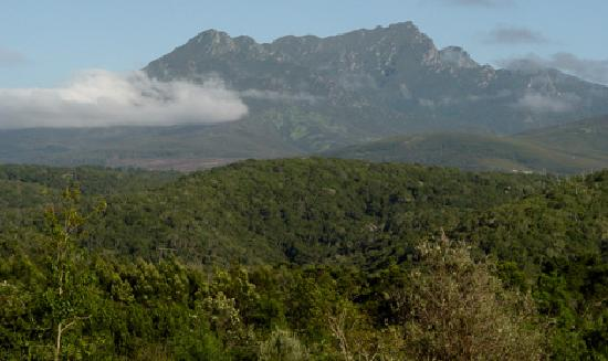 Clairewood: View of nearby Outeniqua Mountains