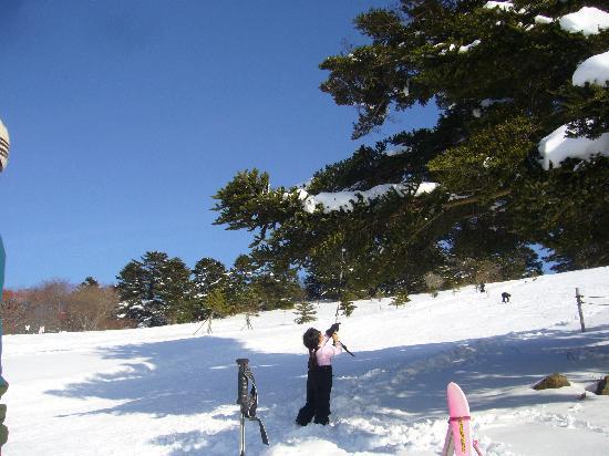 Taman Hutan Mominoki: スキーゲレンデ3