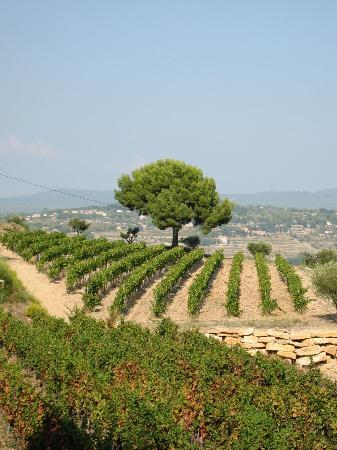 Provence Wine Tours : Its not just about the wine, also beautiful views