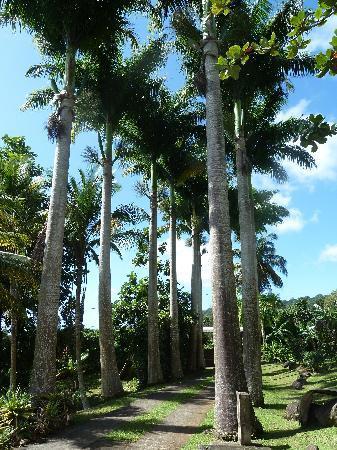 Le Jardin Malanga: Entrance