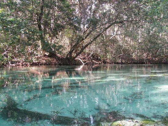 Weeki Wachee, Floryda: Such clear water!