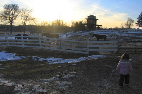 Timber Ridge Lodge & Waterpark: Horse stables