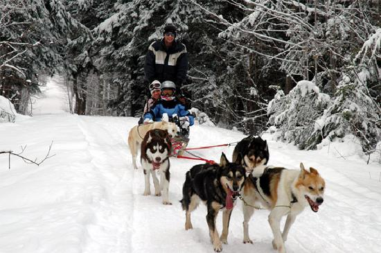 Μασαχουσέτη: Dogsledding in Central Massachusetts