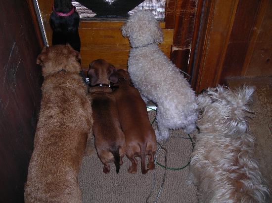FloAnn's Cottages: We Love Pets #2