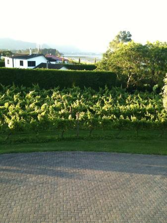The Point Lodge : View from the room of the vineyard
