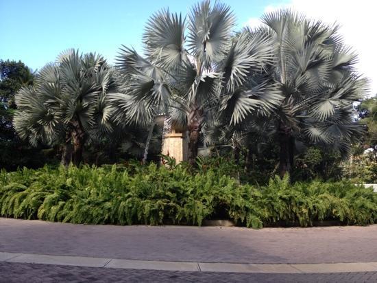 The St. Regis Bahia Beach Resort: water fountain