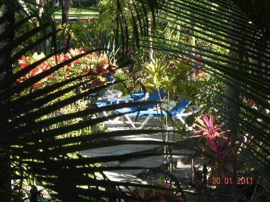 Albatros Condo Hotel : Garden