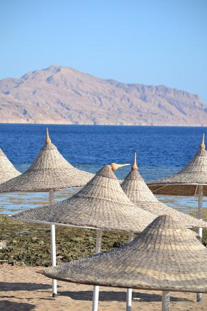 Tiran Island Hotel: Beach and Island view