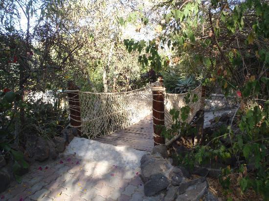 Kuriftu Resort: rope bridge