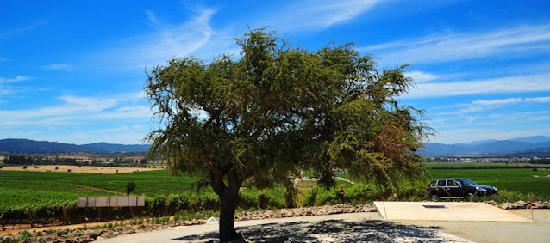 Casablanca Valley Wine Route: Casas del Bosque Vineyard. Beautiful and made with love.