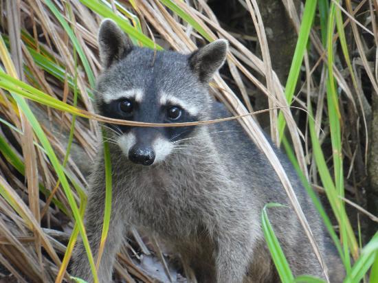 Playa Manuel Antonio: Fauna al alcance de la mano