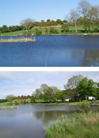 Tyddyn Sargent Coarse Fishery: Tyddyn Sargent Lakes