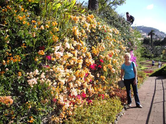 January Floral Display Picture Of Madeira Botanical