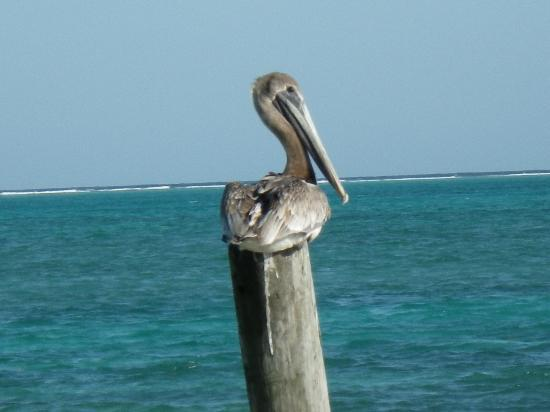 Seaside Cabanas: This pelican was frequently sitting on this pole in front of the hotel's beach.