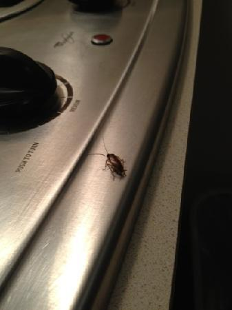 WoodSpring Suites Tallahassee Northwest : Roaches on stove, there were tons more under the burners!!!!
