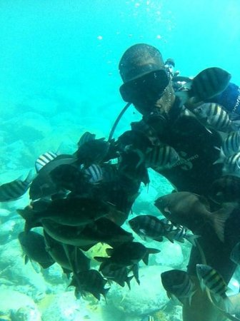 Sint Maarten, St Martin / St Maarten: Diver feeding the fishes