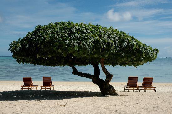Etu Moana: Our Signature Tree