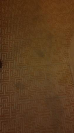Rodeway Inn at Six Flags: carpet whole room looks like this