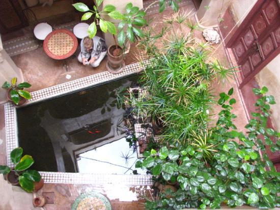 Riad les Inseparables: le bassin de la fontaine et ses poissons