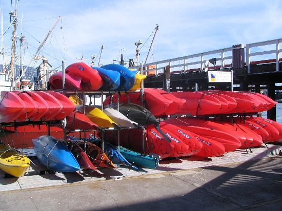 Paddle Sports Center : Plenty of options for paddling in the Santa Barbara Harbor