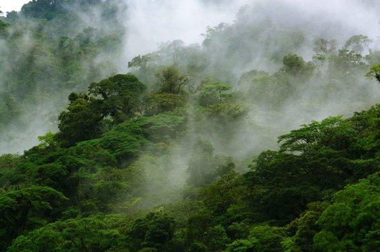 Children's Eternal Rain Forest : Bosque Eterno