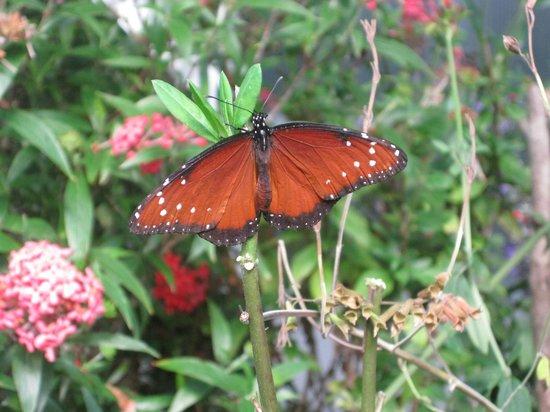 Homosassa Butterfly: Butterfly habitat