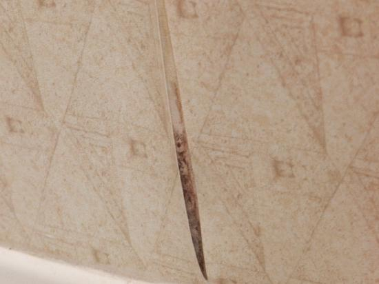 Embassy Suites by Hilton Chicago - O'Hare/Rosemont: torn wallpaper with what looks like mold-Jan 2012