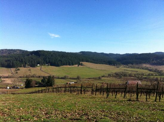 Eugene, Oregon: Vineyard view from the Patio