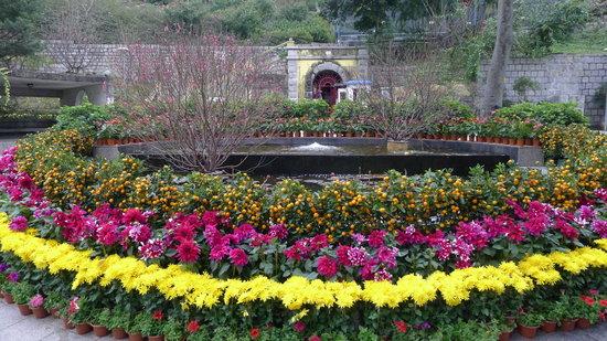Flora 花園