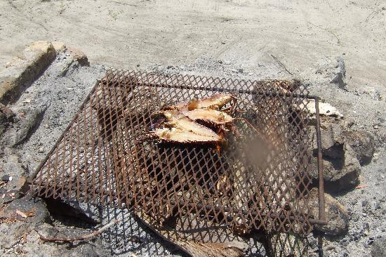 Booby Cay Island: Fresh lobster on the grill