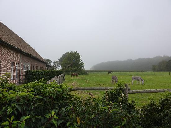 Boskapelhoeve: Adjoining Pasture