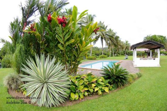 Club Oceanus: garden
