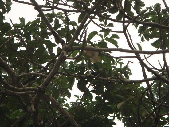 Parijaat Tree: the  unique  parijat  flower