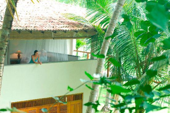 Talalla, Sri Lanka: Tree house luxurious rooms