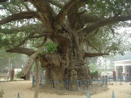Parijaat Tree Lucknow 2018 What To Know Before You Go