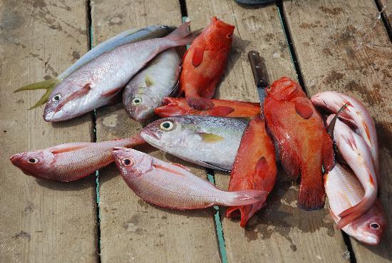 Hotel Morabeza: täglich frischer Fischfang am Steg neben dem Hotel