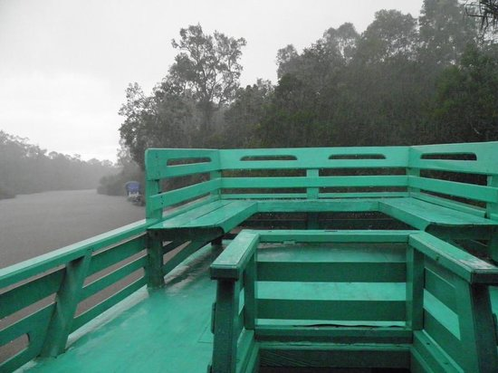Rimba Orangutan Eco Lodge: Arrival